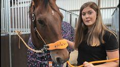 Finde mit Luca & Chippy die passende Decke für dein Pferd   Epplejeck Re... Holland, Youtube, Horses, Animals, Range Rover Sport, Netherlands, Horseback Riding, Tips And Tricks, The Nederlands