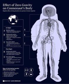 Effect of Zero Gravity on Cosmonaut's Body
