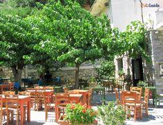 small evia's village - petries Holidays, Plants, Vacations, Holidays Events, Holiday, Planters, Plant, Planting, Vacation
