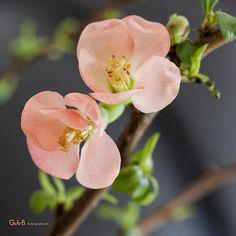 Spring Feelings - #GdeBfotografeert