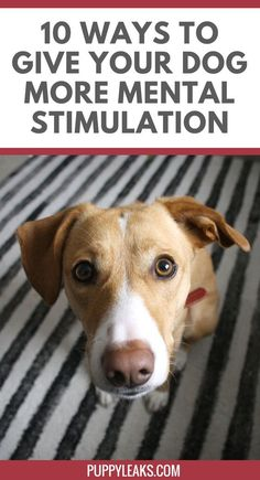 Looking for ways to keep your dog busy? Here's 10 ways to give your dog more mental stimulation. via @jenjelly #dogtrickstraining