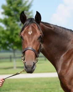 Rachel Alexandra's 2013 filly by Bernardini