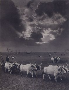 Six Cattle, Hortobágy, 1930 by Rudolf Balogh (Budapest, szeptember – Budapest, október Fine Art Photo, Photo Art, Alien Concept, Farm Photo, Old Photography, Austro Hungarian, Vintage Farm, Ol Days, Travelogue