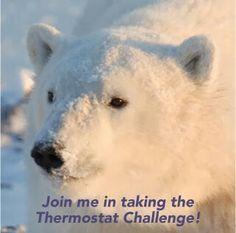 Bears Polar Bears International, Fb Profile, Bedtime Stories, Guinea Pigs, Mammals, Cute Animals, Creatures, Walking, Snow