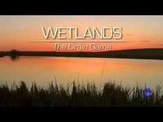 ▶ Wetlands: The Drain Game - YouTube