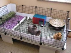 Guinea pig cage is their living space. How much enough is this cage for them to live in? How should guinea pig cage be? Diy Guinea Pig Cage, Guinea Pig Hutch, Guinea Pig House, Baby Guinea Pigs, Guinea Pig Care, Cages For Guinea Pigs, Cavy Cage, Pet Cage, Bunny Cages