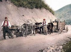Peasant wagon, Bosnia, Austro-Hungary. This color photochrome print was created between 1890 and 1900 in Bosnia, Austro-Hungary. The picture presents Peasant wagon, Bosnia, Austro-Hungary. We have created this collection of illustrations primarily to serve as a valuable educational tool. Contact curator@old-picture.com.