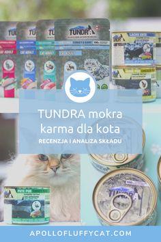 Karma dla kotów Tundra pojawiła się na polskim rynku dość niedawno. Zastanawiasz się, czy ta karma to dobry wybór dla Twojego kota? W tym poście poznasz moją szczegółową analizę, efekty testów i przemyślenia na temat mokrej karmy Tundra w puszkach i w saszetkach. Karma, Wild Turkey, Cat Food, Apollo, Pure Products, Blog, Salmon, Cat Feeding, Blogging