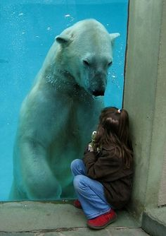 Polar Bear: LITTLE GIRL YOU ARE SO LUCKY THERE IS A THICK PANEL OF GLASS BETWEEN US.  YOU ARE TINY AND I WOULD CRUSH YOU WITH MY POWERFUL JAWS.