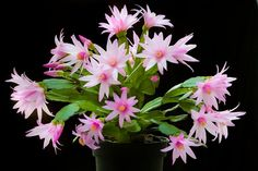 Minden, Plants, Gardening, Flower Of May, Flowers, Lawn And Garden, Plant, Planets, Horticulture