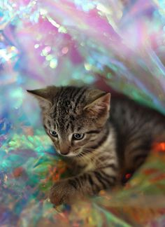 Psychedellic Kittens....William Selden and Gary Card