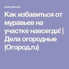 Как избавиться от муравьев на участке навсегда!   Дела огородные (Огород.ru)