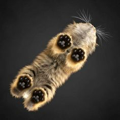Cat photographed from underneath, standing on glass table