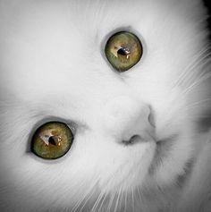 stunning kitty eyes