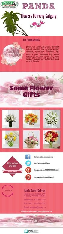 Same Day Flowers Delivery in Calgary