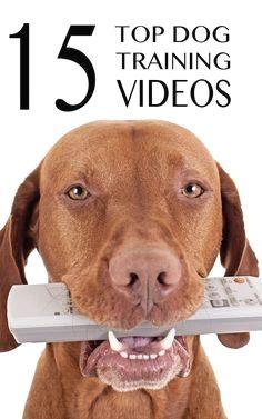 4d6596c4c46 34 Best Zee dog images