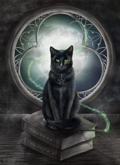 A Familiar Cat by CLB-Raveneye wizard monster beast creature. The Effective Pictures We Offer You About Cute Cats quotes A quality picture can tell you m I Love Cats, Crazy Cats, Cute Cats, Tattoo Gato, Chat Halloween, Animal Gato, Magic Cat, Black Cat Art, Black Cats