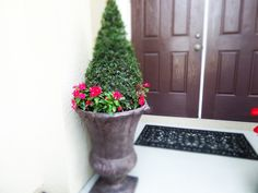Eugenia Topiary Eugenia Topiary, Concrete Landscape Edging, Garden Urns, Container Gardening, Statues, Porch, Planter Pots, Bloom, Gardens