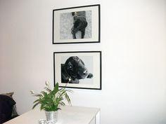 black frames white wall dog Black Frames, White Walls, Making Ideas, Gallery Wall, Dog, Pets, Home Decor, Off White Walls, Diy Dog