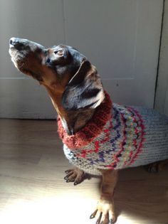 Las Teje y Maneje: doggy sweater Dachshund Love, Dog Sweaters, Our Love, Dog Breeds, Dachshunds, Knit Crochet, Arts And Crafts, Knitting, Pets