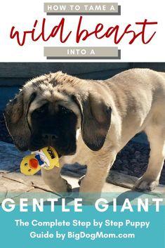 Puppy Training Schedule, Training Your Puppy, Dog Training Tips, Training Pads, Training Classes, Training Collar, Puppy Schedule, Training Equipment, English Mastiff Puppies