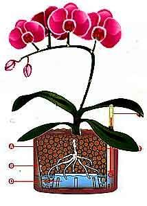 Most flower growers love orchids due to its enchanting fragrances and vibrant colors. Orchid gardening needs very detailed and precise care whether you're opting for hydroponic growing or soil gardening. Selecting the appropriate growing media for the corresponding orchid species is very important. The function of growing media is to hold moisture and nutrients and …