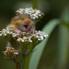 Happy little mouse.  So cute!