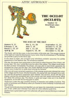 Aztec Astrology - Oceloti (the Ocelot)