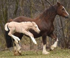 Foal jumps for joy | 10 of the Happiest Looking Horses Ever
