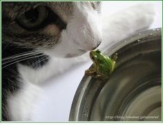 cat and frog