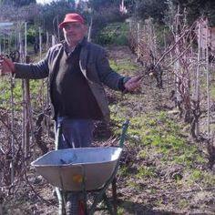 TCI - Concorso 2015 - Paesaggi del cibo  Erasmo nella sua vigna a Chia (Domus de Maria - Ca) mentre pota le sue viti in preparazione del nuovo raccolto ( uva da tavola, Moscatellone, buonissima e rarissima ; uva da vino, cannonau ).  Da votare al link: http://www.touringclub.it/i-paesaggi-del-acibo/contadino-doc