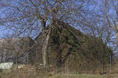 Waldviertel Dog Walking, Plants, Photography, Woodland Forest, Photograph, Fotografie, Photoshoot, Plant, Planets