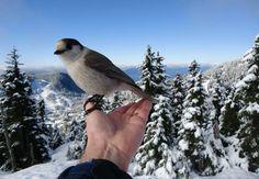 via: Doug Bentley, Hollyburn Ridge, Cypress Mountain, courtesy of Global BC