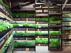 instore farming - Albert Heijn is the first supermarket in the Netherlands to be influenced by the increased popularity of urban gardening, and now features in-store. Cilantro Plant, Chives Plant, Supermarket Design, Retail Store Design, Growing Raspberries, Mint Plants, Types Of Herbs, Kitchen Herbs, Growing Herbs