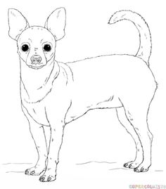 How to draw a chihuahua step by step. Drawing tutorials for kids and beginners.