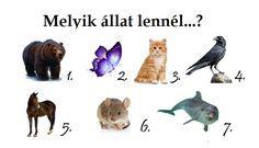 Melyik állat lennél? Elárulja lelked ősi misztikus képességét! - SzórakozzOnline