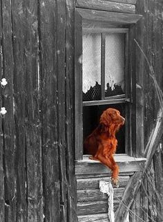 Dog waiting at the window.