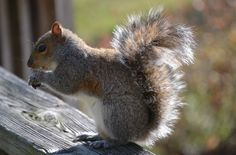 Used to love to watch the squirrels on the porch.