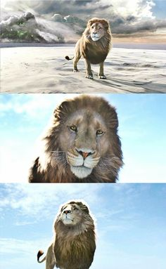 Wrong will be right when Aslan comes into sight