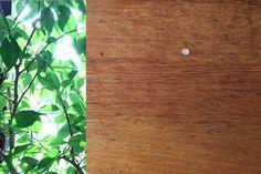 Table leaf - nature/culture