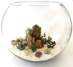 Terrariums are very easy to care for, especially when paired with the drought loving plants such as succulents. The best part of owning a