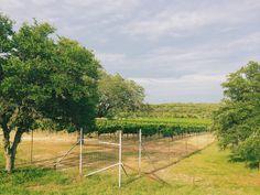 Driftwood Estate Winery // Driftwood, Texas// Photo by: @laura13elliott