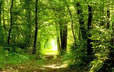Country Roads, Plants, Landscape, Woodland Forest, Pictures, Landscapes, Plant, Planets