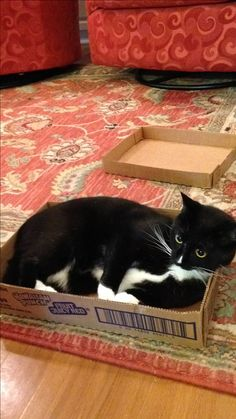 Just loves boxes …