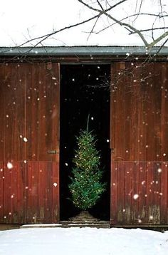 tree in a barn. lovely.