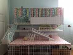 Buy The Right Size Guinea Pig Cage. Photo by maskarade Purchasing a guinea pig cage in a pet shop is unfortunately a good way to ensure that it is in fact too small for your pet's needs. Diy Guinea Pig Cage, Guinea Pig Hutch, Guinea Pig House, Pet Guinea Pigs, Guinea Pig Care, Hamsters, Guinie Pig, Pig Habitat, C&c Cage
