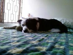 Coco is sleeping
