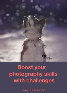Do you feel like you're not creating the images you hoped for? Dog photography tips & tricks by www.DOGvision.be