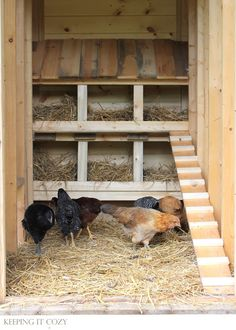 Keeping It Cozy: Chickens