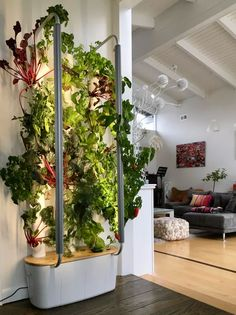Gardyn review: Building a wall of salad is easy with smart hydroponics